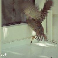 Первый полет :: JS PhotoCompany