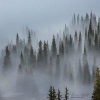 Туман :: Евгений Осадчий