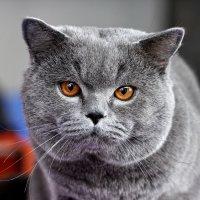 Солидный кот :: Сергей Сёмин