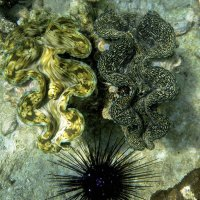 Сходка морских обитателей :: Александр Рейтер
