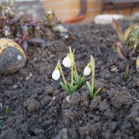 Первое дыхание весны. :: Серж Поветкин