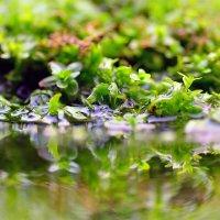 Микромир в аквариуме :: ID@ Cyber.net