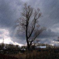 Мокрый апрель :: Евгений Юрков