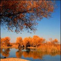 Осень золотая :: Ахмед Овезмухаммедов