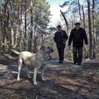 Прогулка в лесу :: лиана алексеева