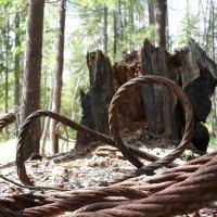 Дерево и сталь в отставке :: Александр Крупин