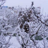 Снежно :: Александр Скамо