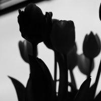 Букет цветов :: Наталья Адаменко