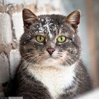 Котик :: Олег Филиппов