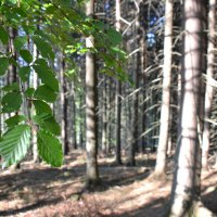 Утро в лесу :: Андрей Земcкий