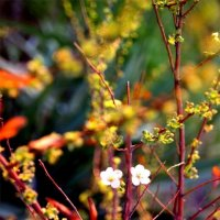 Первые цветы :: Юлия Тригуб