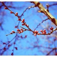 весна :: Юлия Тригуб