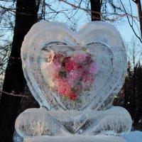 И в ледяном сердце расцветает весна... :: Ирина Терентьева