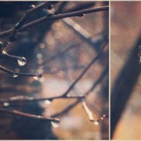 Весна :: Екатерина Чалая