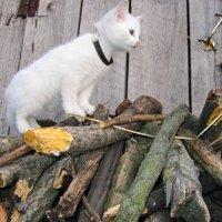 Котёнок 1... :: Вадим Кузнецов
