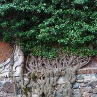 И на камнях растут деревья ... :: Александр Яковлев
