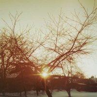 Солнце) :: Саша Матвіюк