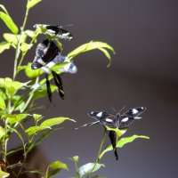 butterfly :: Александр Голубев