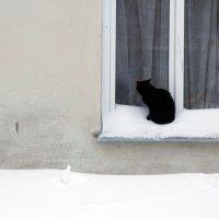 навеки поселиться :: Ната Казберук