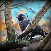 А наши птицы не улетают на юг ... :: ALISA LISA