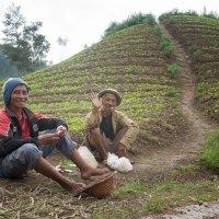 Индонезийские фермеры. :: Иван Евгеньев