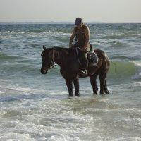 Купание коня :: Анна Шенберг