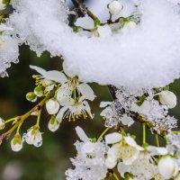Под снежной шляпой :: Ольга Решетникова