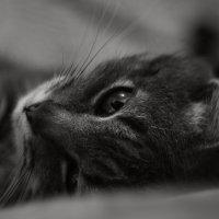 портрет кота :: Валера Горбань