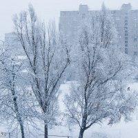 Первый снег. :: Влад Пастушенко