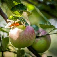 Без ГМО :: Crazy Fox