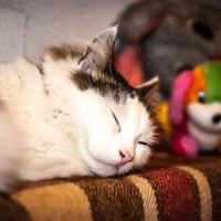 Спят усталые игрушки :: Crazy Fox