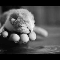Маленький котенок :: Alina Rustamova