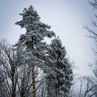 Зимний лес. :: Alexey Malishev