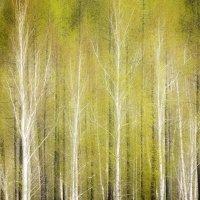 весна :: Александр Иванов
