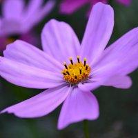 цветок :: Валера Горбань
