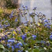 Эти летние дожди. :: Анна Тихомирова