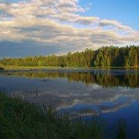 Лесное озеро :: Альберт Беляев