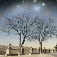 Светлая ночь :: Вероника Касаткина