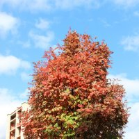 Осеннее деревце :: Игорь Панченко