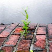 И на камнях растут деревья... :: Александр Яковлев