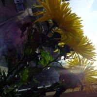 Первые цветы весной :: Арима Архириль