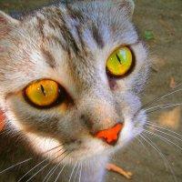 """""""Эти глаза напротив..."""" :: Vera kvs"""