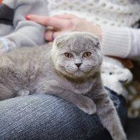 Выставка кошек 11.02.2012 :: Андрей Юзеев