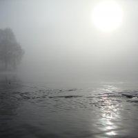 туман :: юля кёниг