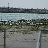Птичий базар :: Александр Леонов