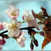 Ах, как хочется весны. :: Анна Тихомирова