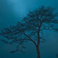 одинокое :: Михаил Фенелонов