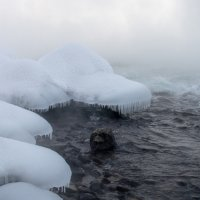 Снежные грибы :: Александр Бабарика