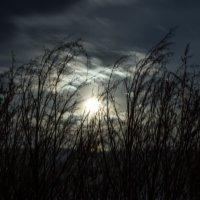 Ветер и ночь :: Александр Бабарика