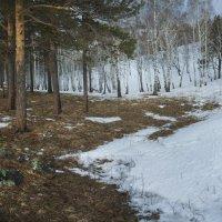 противостояние: весна вытесняет зиму! :: Александр Иванов